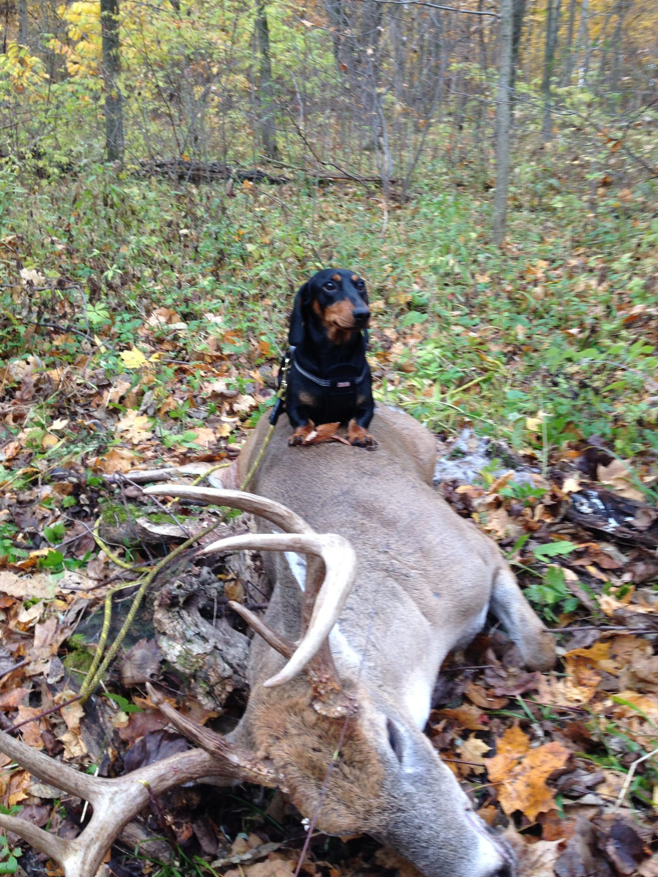 Fletch's First deer recovery