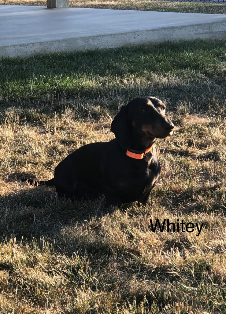 Whitey 9/15/2020